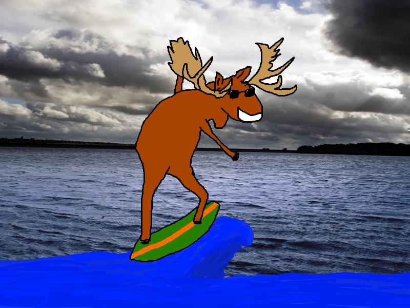 Cool surfing moose